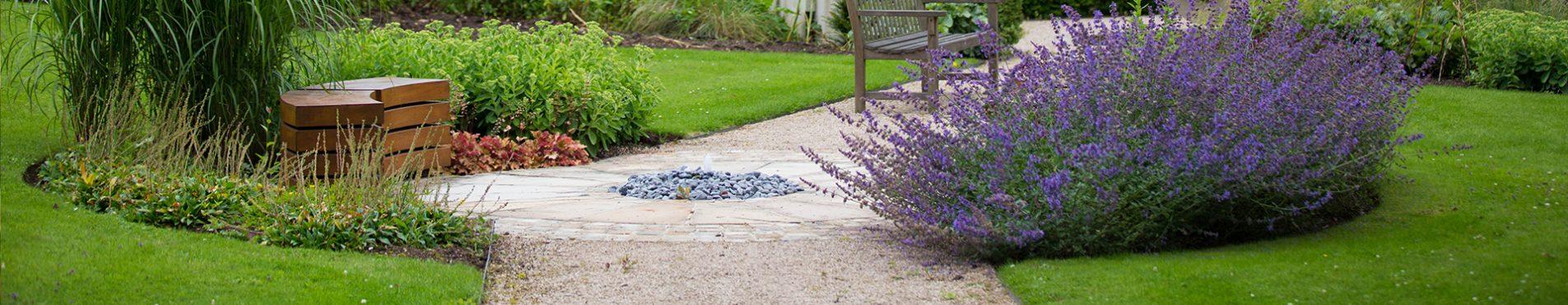 Longfield garden lavender plant