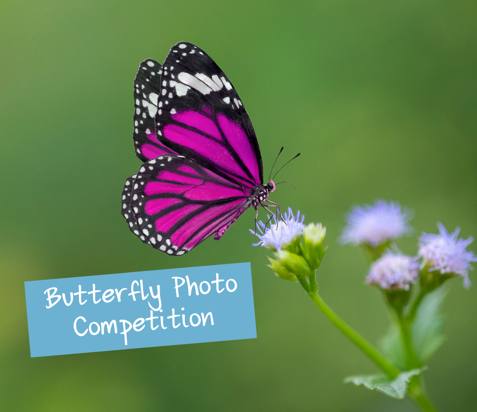 Butterfly photography competition